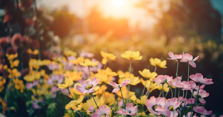 Design Your Garden Like A Pro With These Useful Tips